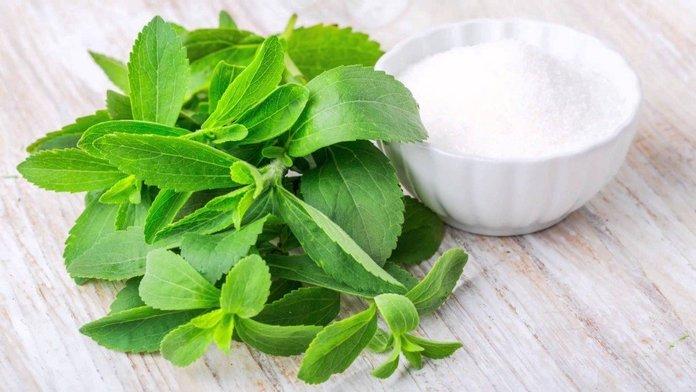 Лечебные свойства и противопоказания к применению стевии