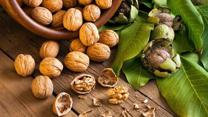 Полезные свойства грецких орехов