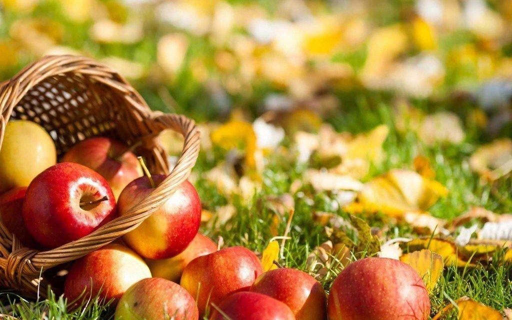 Состав и калорийность яблок