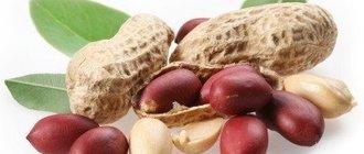Арахис: полезные свойства, рекомендации, рецепты