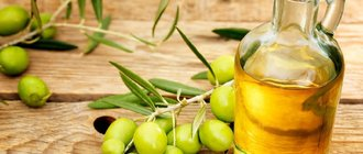 Оливковое масло: полезные свойства и противопоказания