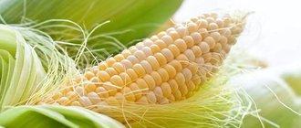 Кукурузные рыльца: польза и вред для огранизма