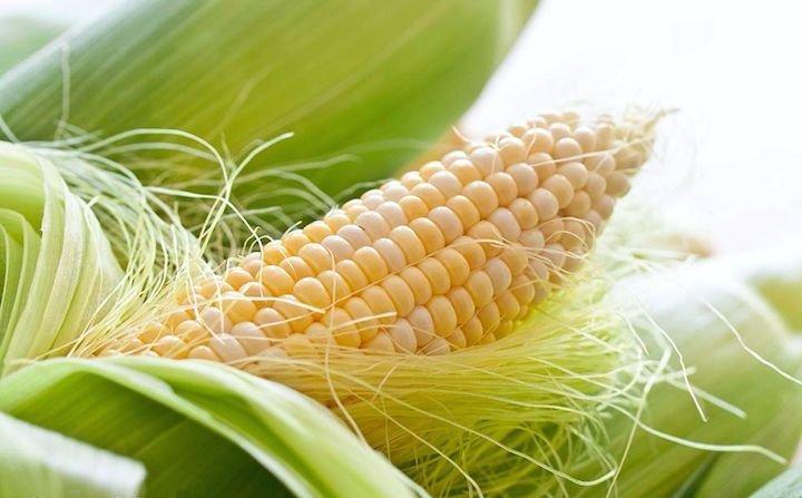 Кукурузные рыльца - лечебные свойства и противопоказания, применение
