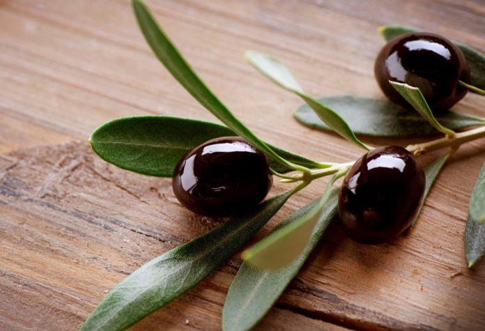 Польза и вред маслин