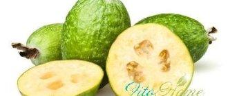 Фейхоа: полезные свойства американского фрукта