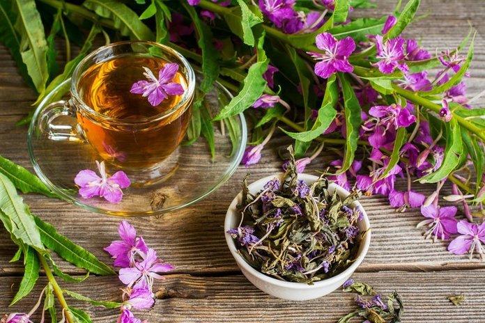 Иван чай в народной медицине