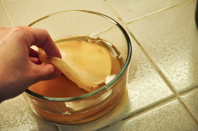 Уход за чайным грибом