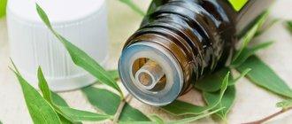 Эфирное масло чайного дерева: применение и свойства