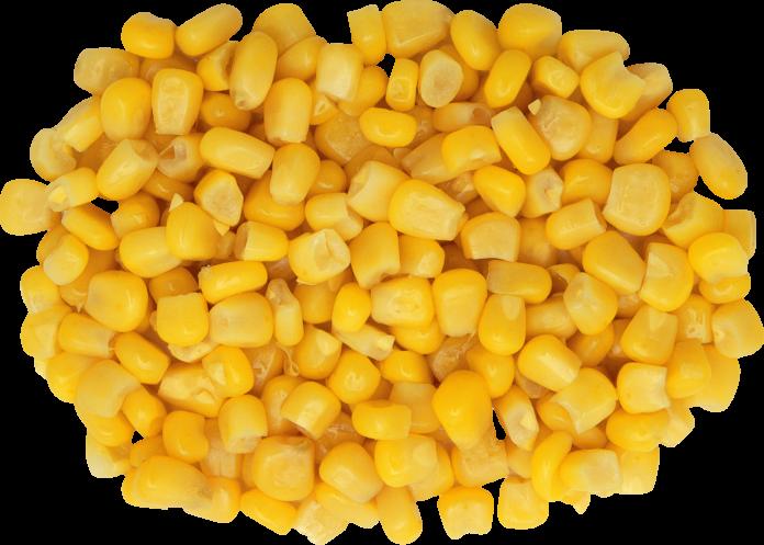 Польза и вред консервированной кукурузы