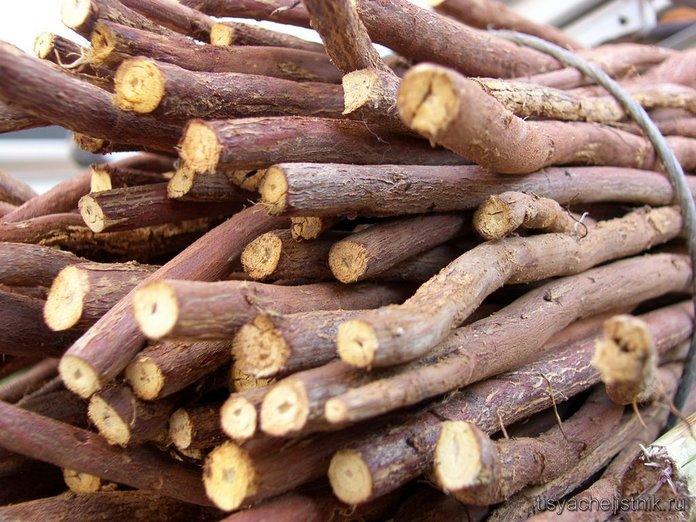Корень солодки: лечебные свойства и противопоказания