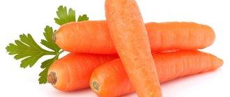 Морковь: польза и вред для здоровья