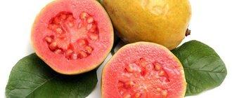 Гуава — полезные свойства, применение и рецепты