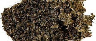 Ортосифон тычиночный (почечный чай)