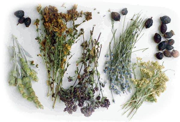 Травы лекарственные при климаксе