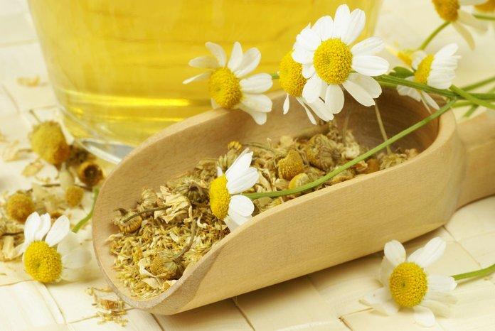 Садовая ромашка для приготовления народных лекарств