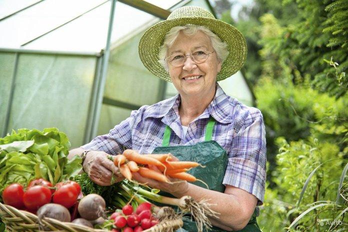Бабушка выращивает полезные овощи