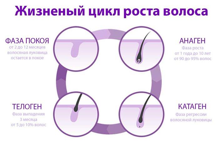 Жизненный цикл роста волос на голове