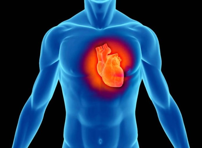 Лечение сердечно-сосудистой системы земляникой