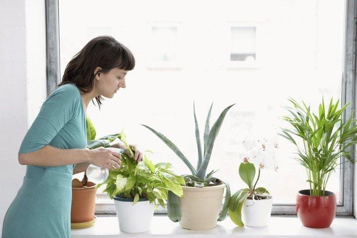 Девушка поливает комнатные цветы