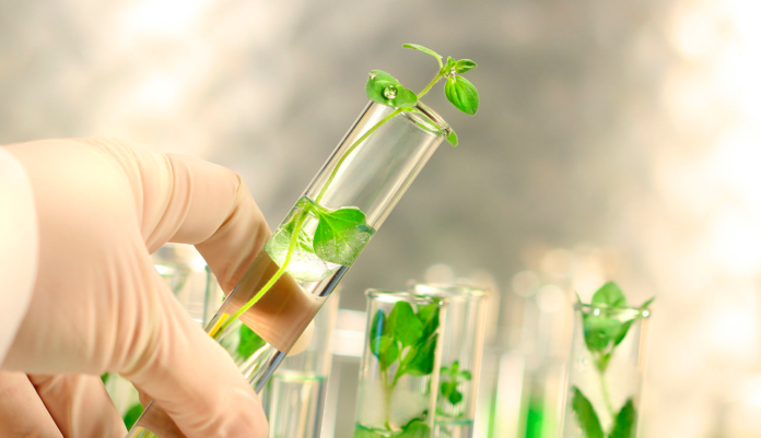Химический состав травы мокрицы