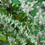 Пол пала трава лечебные свойства и инструкция по применению