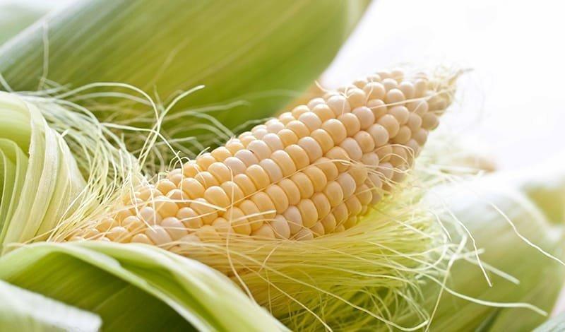Кукурузное рыльце инструкция