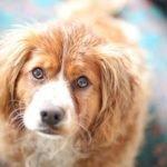 Как лечить папилломы у собак?