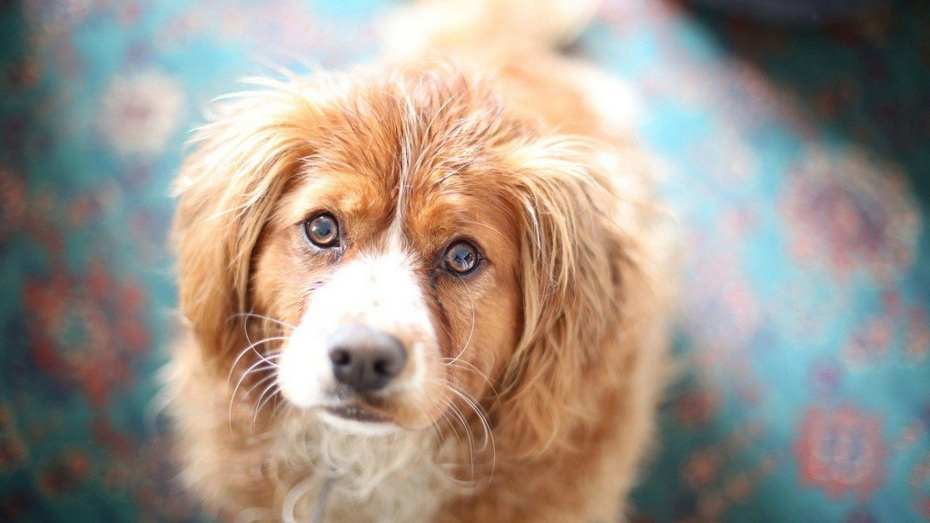 Лечение папилломы у собак в домашних условиях