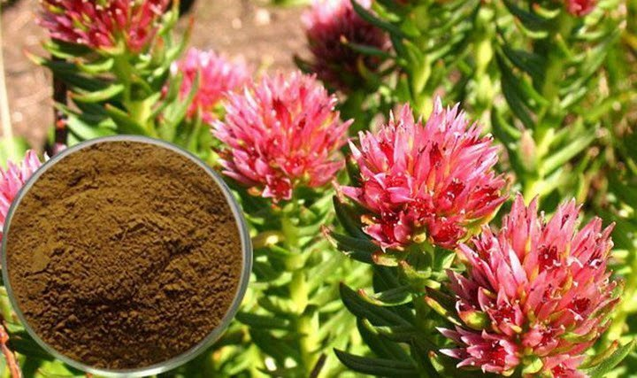 Родиола розовая лечебные свойства и противопоказания к применению