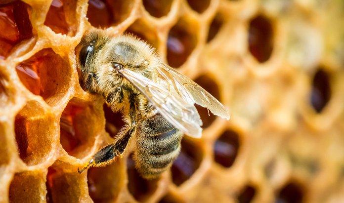 Лечебные свойства пчелиного подмора