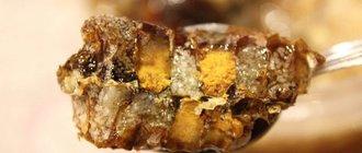 Перга пчелиная: полезные свойства, отзывы про применение