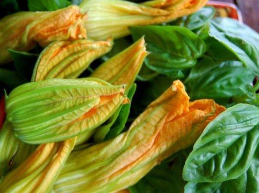 Как отличить мужские и женские цветы у тыквы — блюда из цветов тыквы
