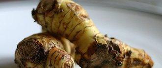 Корень калгана лечебные свойства и применение — настойка корня калгана