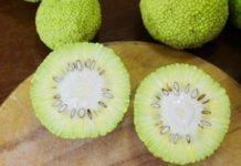Лечебные свойства адамова яблока — рецепт настойки для суставов