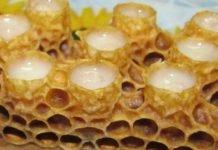 Пчелиное маточное молочко: свойства и отзывы