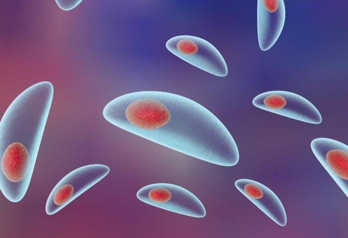 Возбудитель Toxoplasma gondii