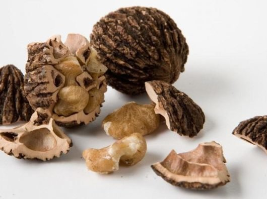 Черный орех от паразитов лечение и рецепты