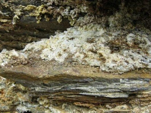 Каменное масло лечебные свойства и негативные отзывы