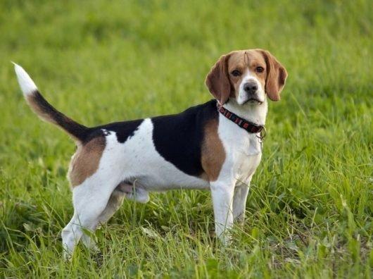 Виды глистов у собак — таблетки от паразитов у собак