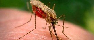 Как правильно лечить малярию?