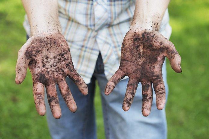 Заражение аскаридами из почвы