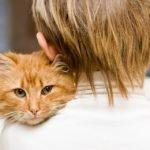 Паразиты у кошек передающиеся человеку симптомы и лечение