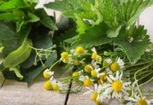 Как лечить псориаз травами?