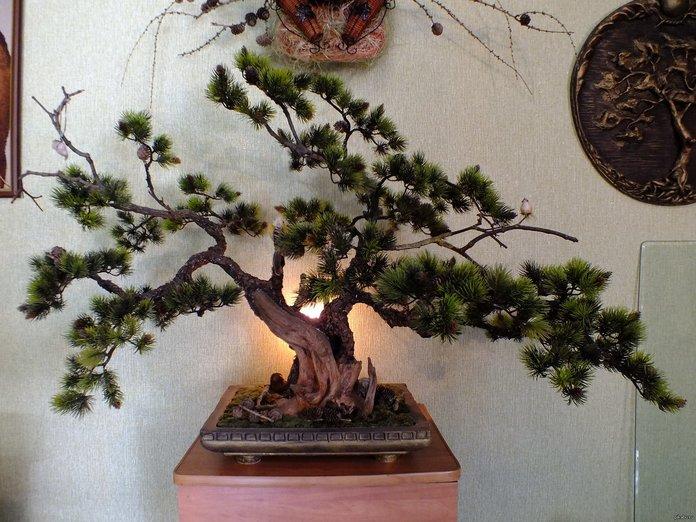 Культура выращивания бонсай