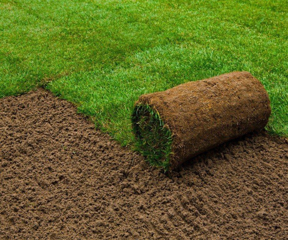 Как вырастить газонную траву на даче?