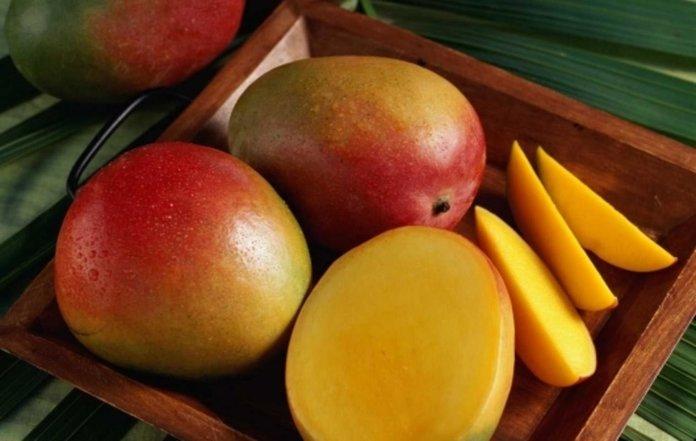 Урожай манго