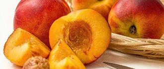 Как вырастить из косточки персик?