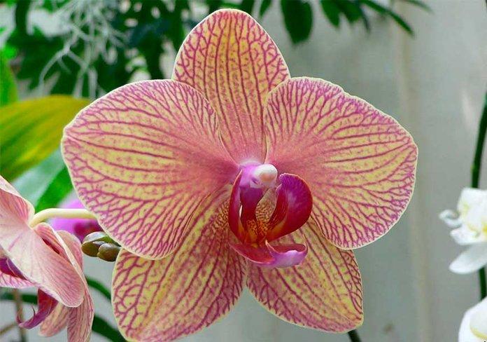 Выращивание орхидей надому