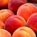 Как вырастить из косточки персика дерево дома?