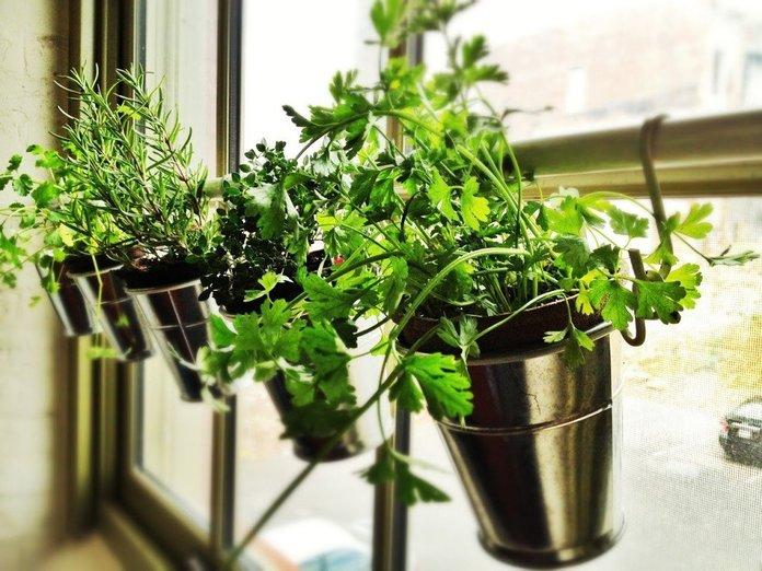 Горшки для домашнего выращивания зелени